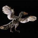Archaeoraptor liaoningensis