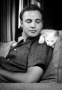 Молодой Марлон Брандо и котэ